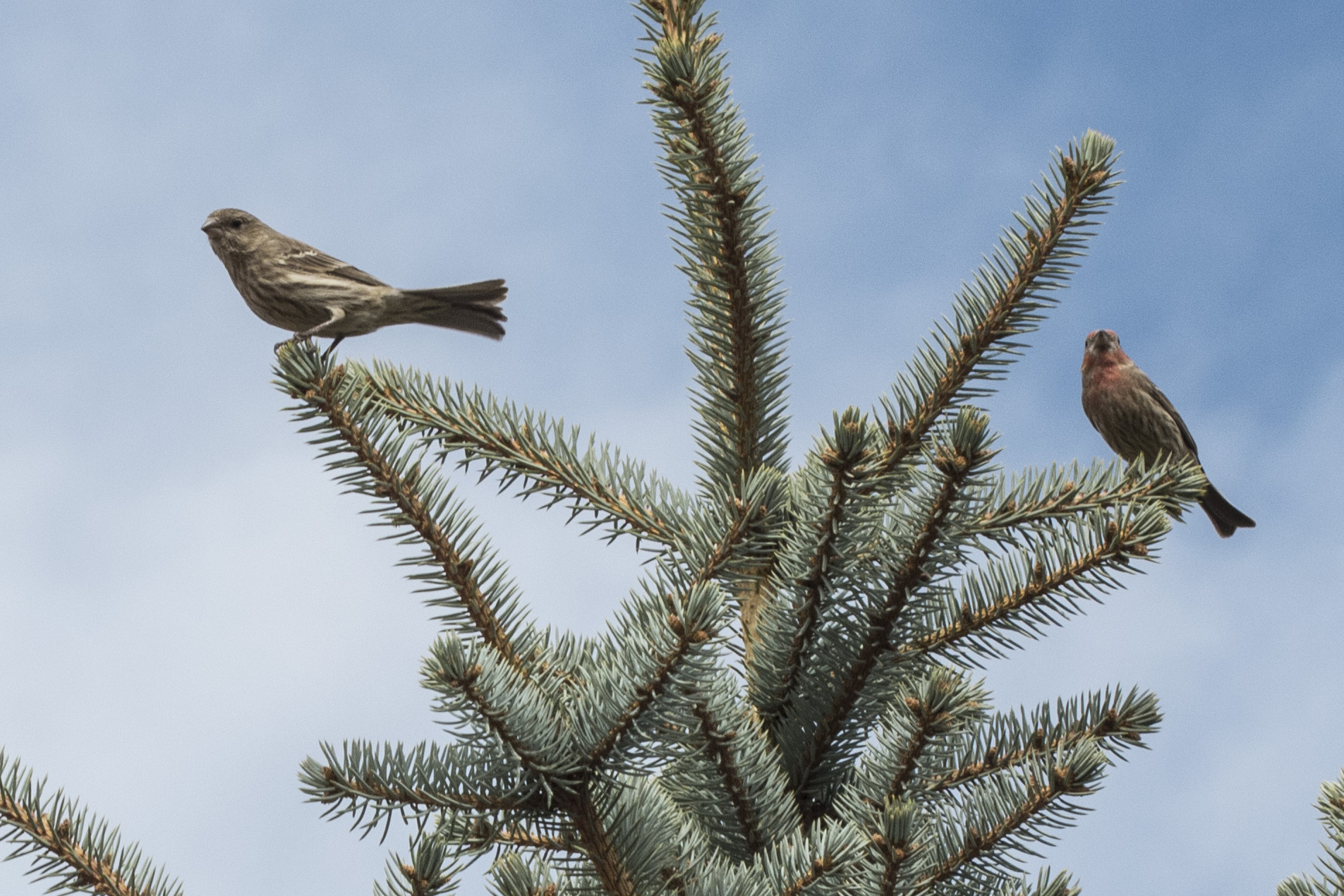 Finches01